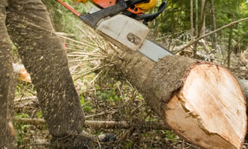 Tree Service in Naperville IL Tree Service Estimates in Naperville IL Tree Service Quotes in Naperville IL Tree Service Professionals in Naperville IL