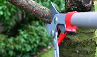 Tree Pruning Services in Naperville IL