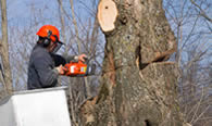 Tree Removal in Naperville IL